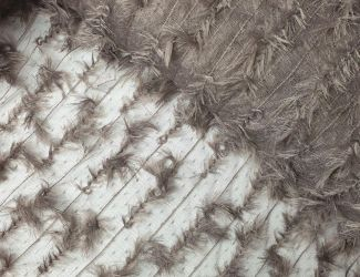 "Кружевная ткань ""Piuma"" с имитацией пера, тауп"